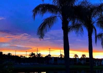 florida-palmtree-sunset-1-1000x750